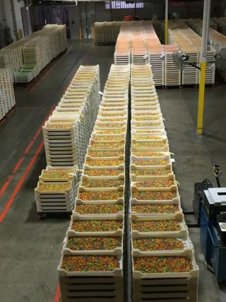 Jelly bins of multi